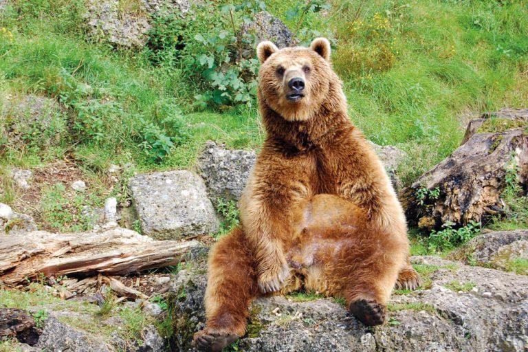 innsbruck zoo alpenzoo baer sitzt staedtereise projektwoche klassenfahrt mario webhofer