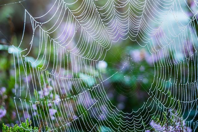 blog spinnennetz digitales lernen projektwoche projekttage schullandwoche foto thomas b pixabay